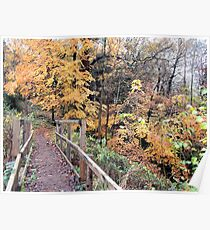Walkway To Autumn (Dudmaston)  Poster