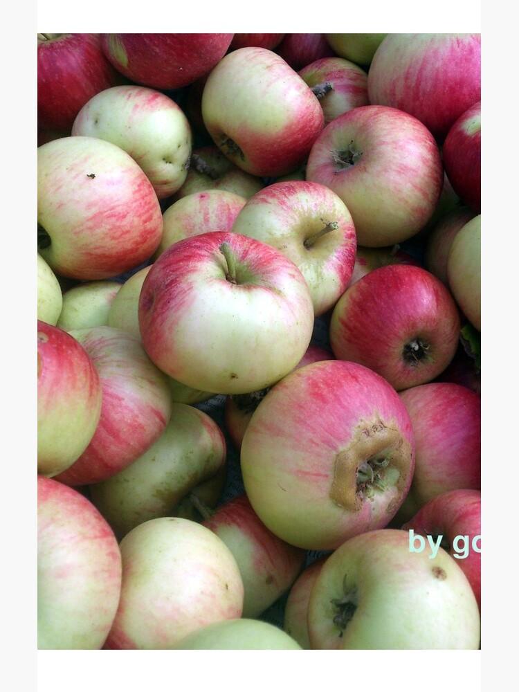 Äpfel - frisch geerntet! von Gourmetkater
