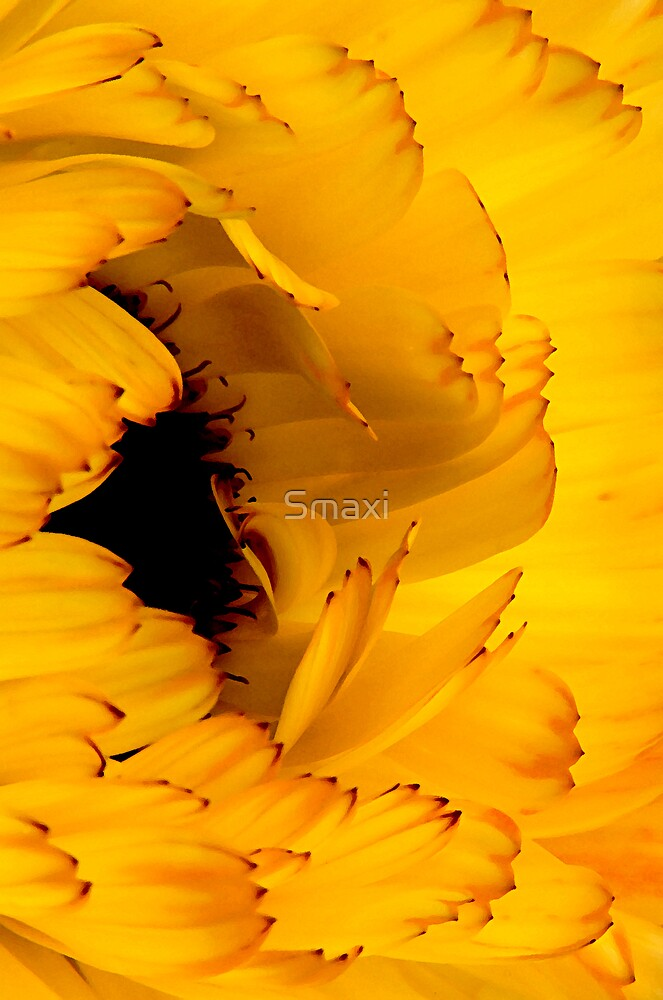 Big Yellow Flower by Smaxi