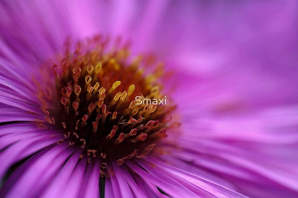 Big Purple Flower by Smaxi