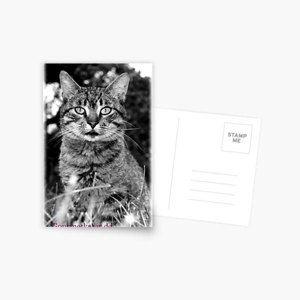 Tiger Tom Postkarte