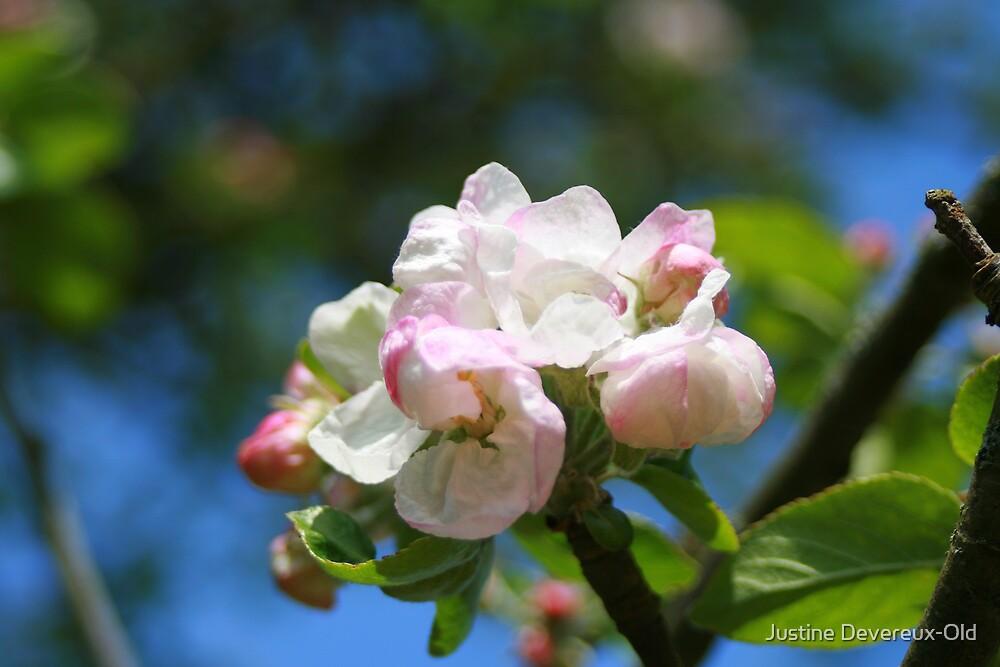 Summer blossom by Justine Devereux-Old