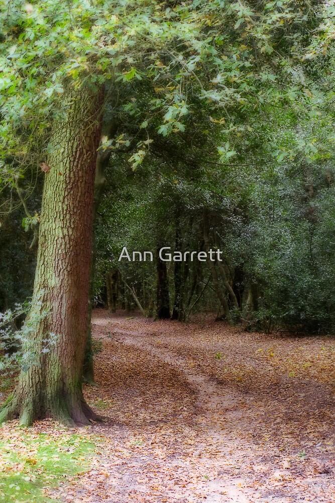 Curling Path by Ann Garrett