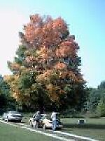 tree in my brothers cemetary that i took picture of by dwery74