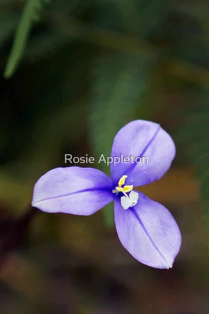 "Native Flag Iris ""Patersonia occidentalis"" by Rosie Appleton"