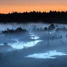 Midsummer night in the bog by Remo Savisaar
