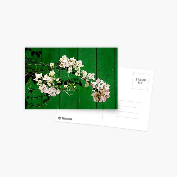 Azalea Postcard