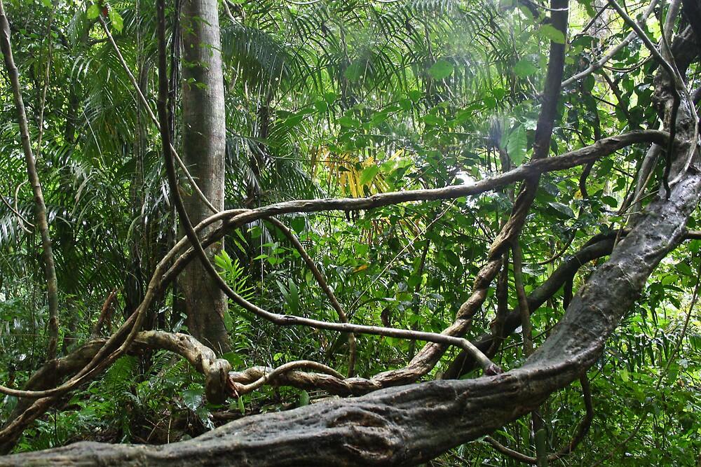 Rainforest by Karen Millard