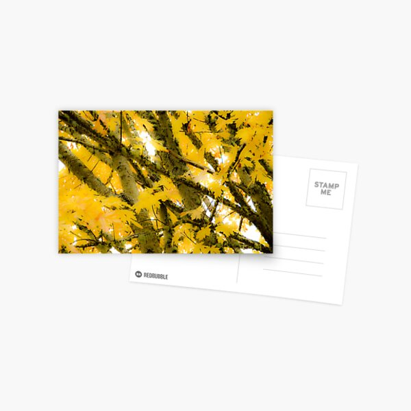 Colours of Fall Postcard
