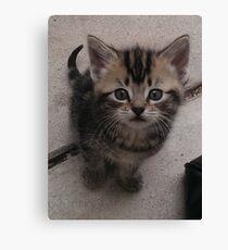 Kitten. Canvas Print