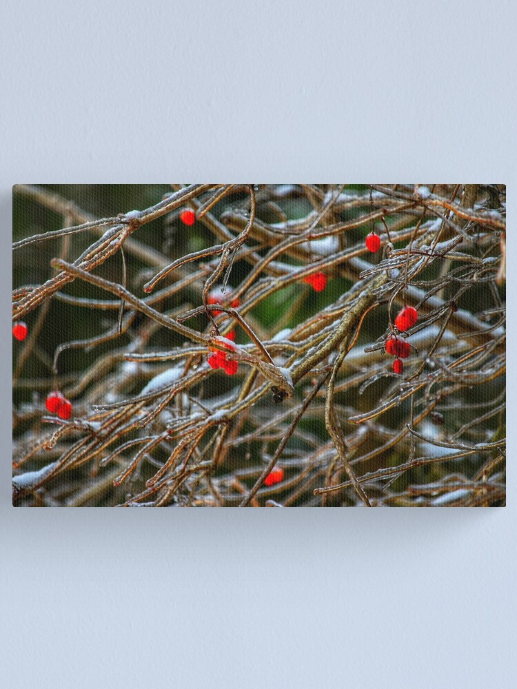 Alternate view of Frosty berries Canvas Print