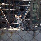 wild kittens  by bwchan
