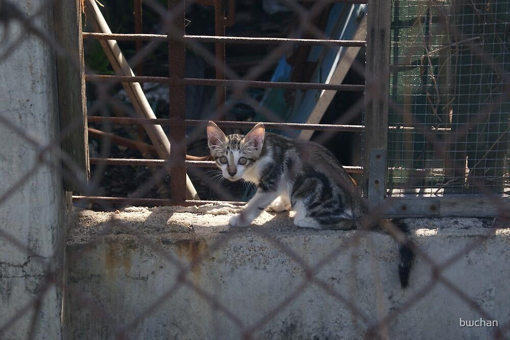 wild kitten (2) by bwchan
