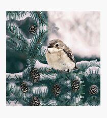 A Bird Photographic Print