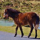 Tip-Toeing Across the Road by lezvee