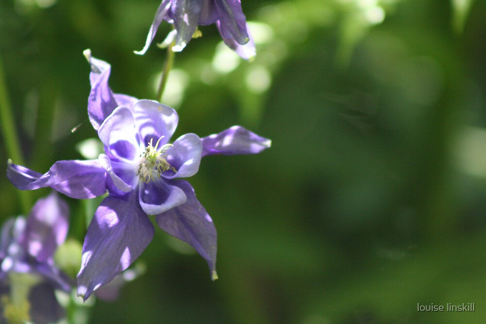 purple bonnet by louise linskill