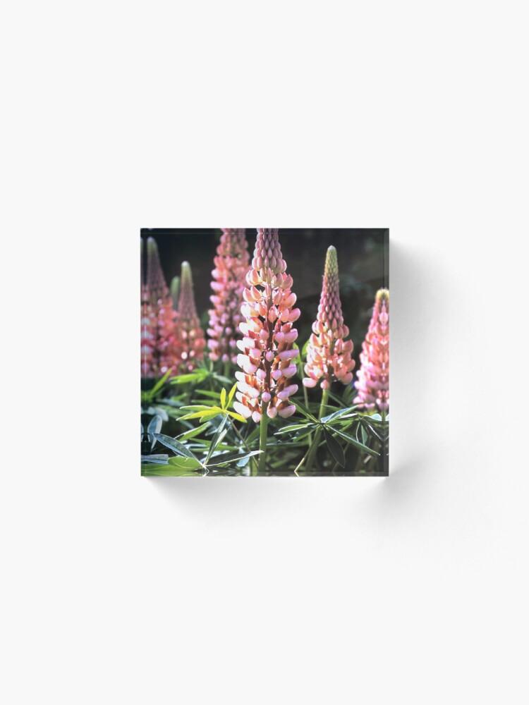 Alternative Ansicht von Lupinen-Blüten Acrylblock
