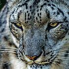 Snow Leopard by JMChown
