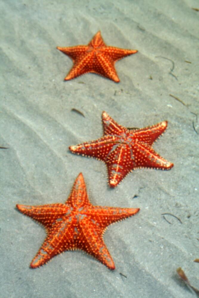 Starfish by Karen Millard