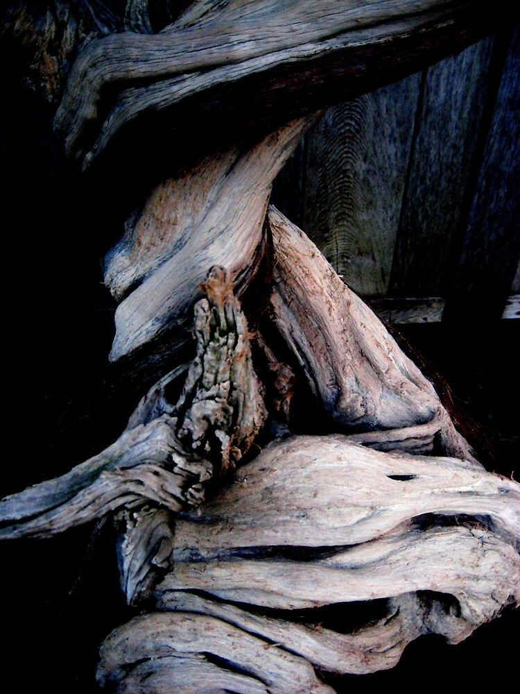 Gnarled Wood  by SamanthaJune