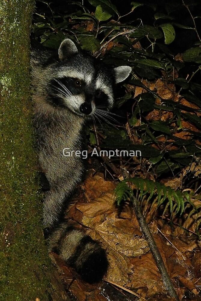 Forest Spy by Greg Amptman
