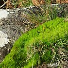 Moss And A Tiny Toadstool by lezvee