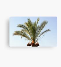 tree palm Metal Print