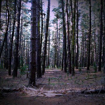 Gloomy Pine Forest by donkeynomad