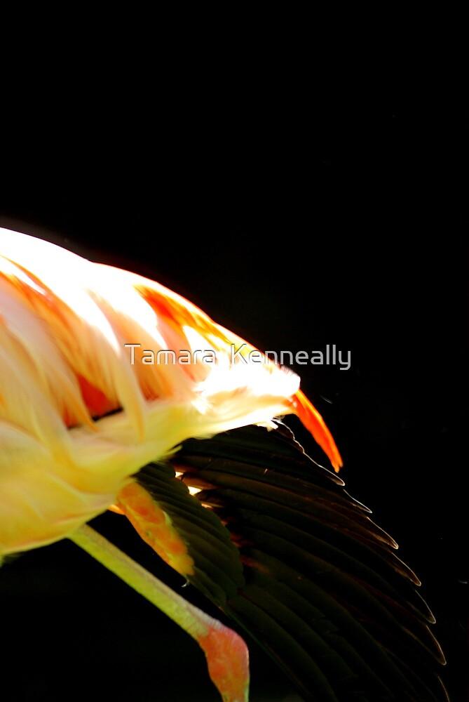Flamingo Wing by Tamara  Kenneally
