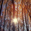 Shenandoah by Paula Bielnicka