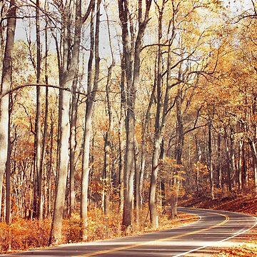 Autumn Drive by pinkangel840