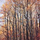 Autumn Breeze by Paula Bielnicka