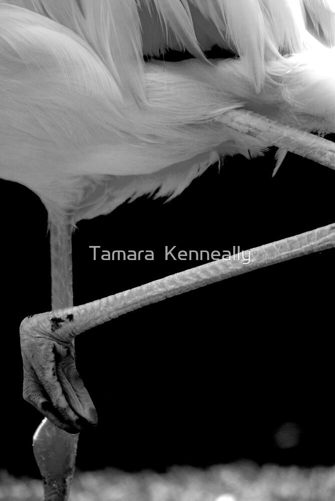 Flamingo dance by Tamara  Kenneally