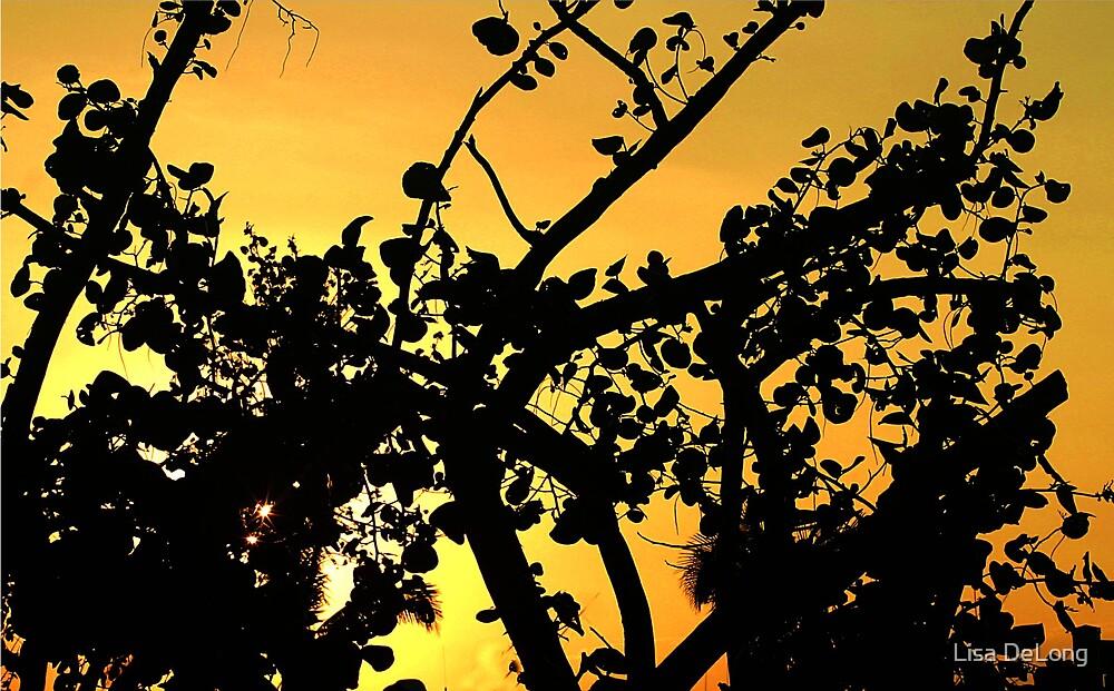 Sun though sea grapes by Lisa DeLong