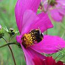 Summer Bee by MMCFraser