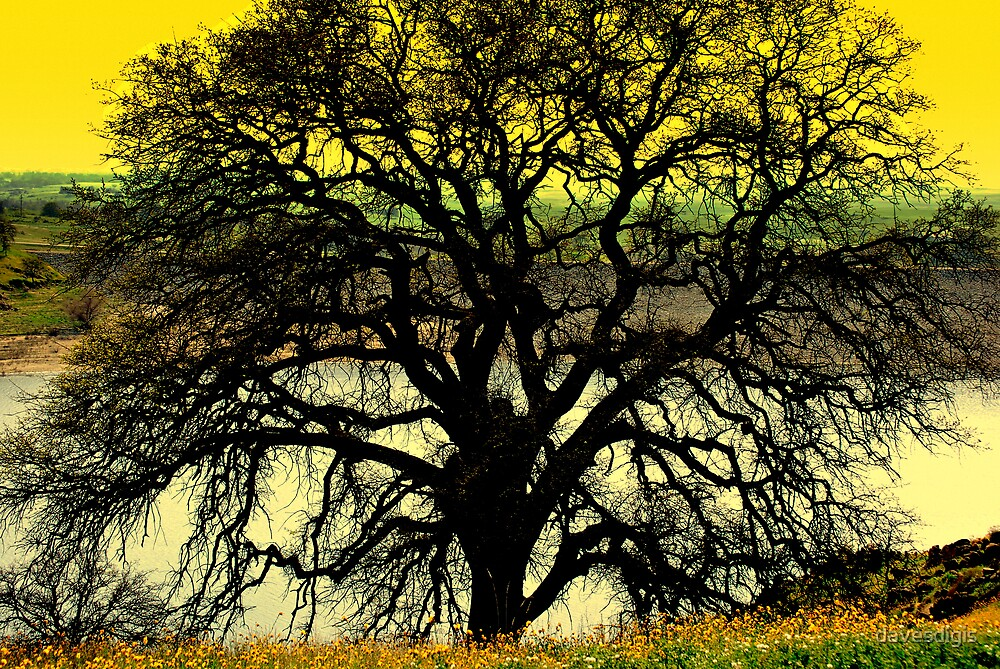 The Ole Oak Tree by davesdigis