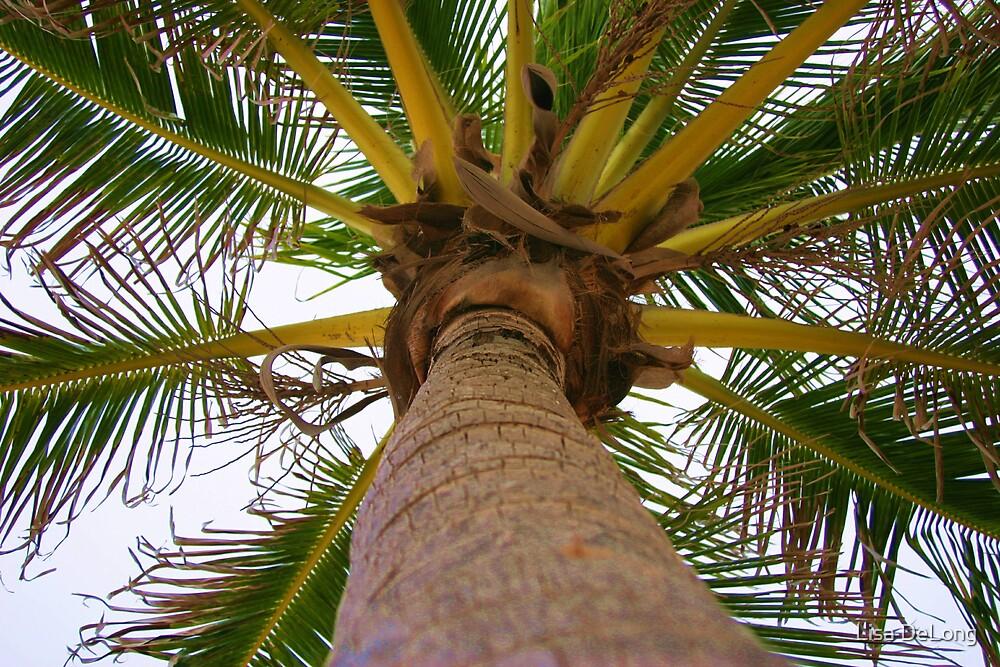 Palm Tree by Lisa DeLong