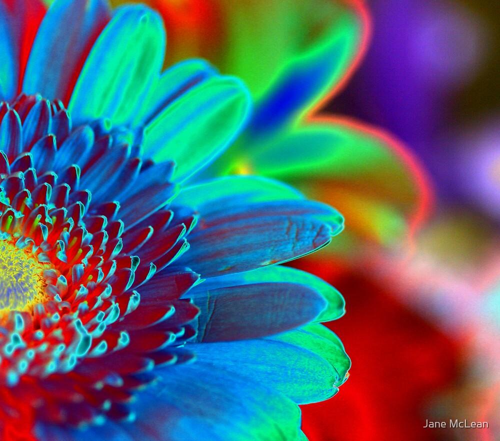 solarized flowers by Jane McLean