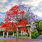 Illawarra Flame tree & Jacaranda by andreisky