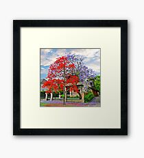 Illawarra Flame tree & Jacaranda Framed Print