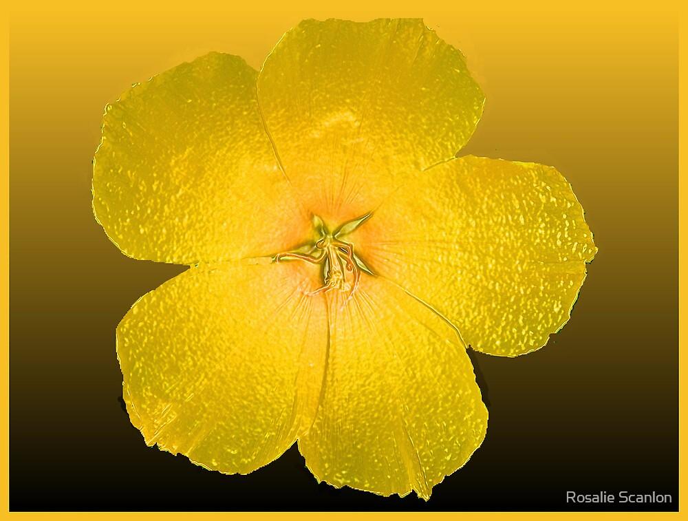 Yellow Glow by Rosalie Scanlon