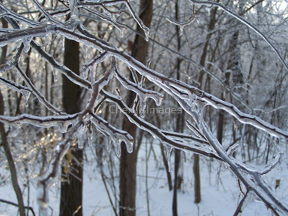 Iced Branch-Forefront Focused by CherylsImages