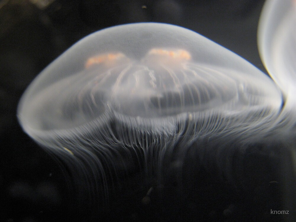 Alien jellyfish by knomz