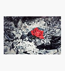 Beauty Rises from the Ashes Photographic Print