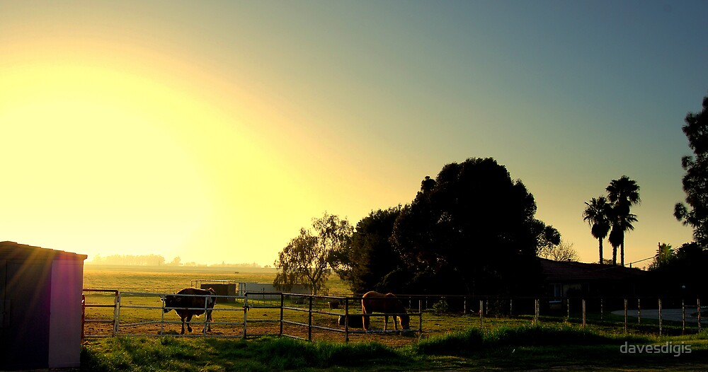 A BRIGHT COUNTRY MORINING by davesdigis