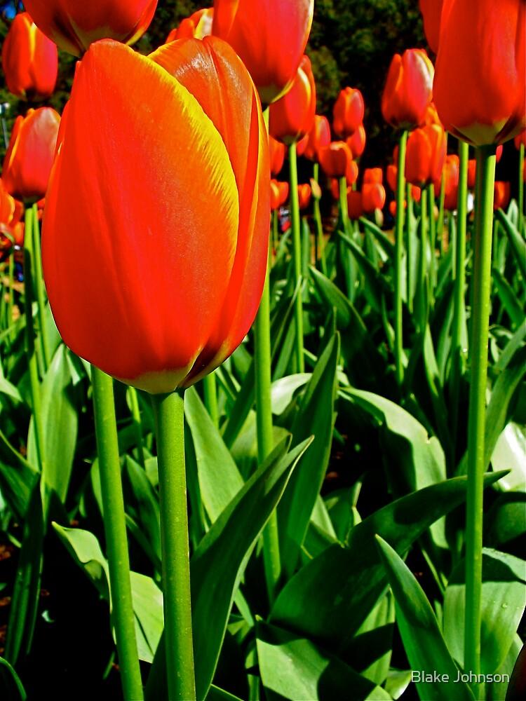 Tulip Jungle by Blake Johnson