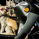 Dressed up Dog waiting for master in Portugal by Sven Brogren