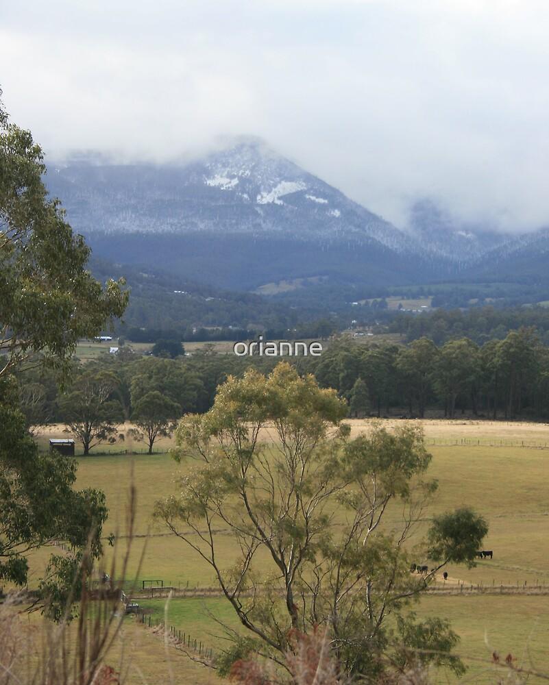 Mt Wellington by orianne