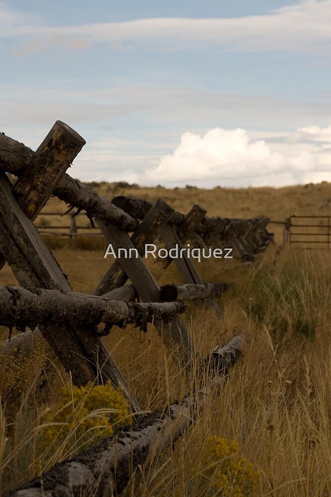 Lead Me On by Ann Rodriquez