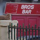 Bros Bar & the Maltese Cat by seymourpics